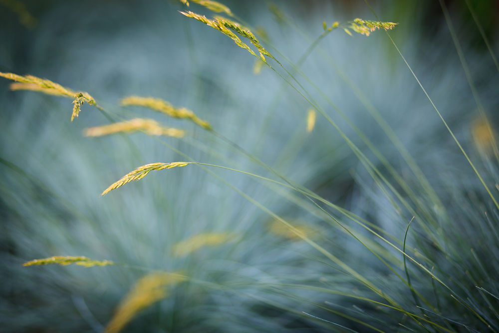 Grasses by Deata