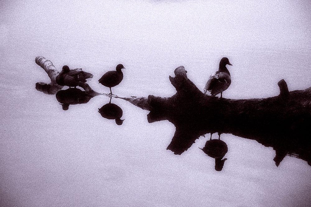 Waterbirds by davehare