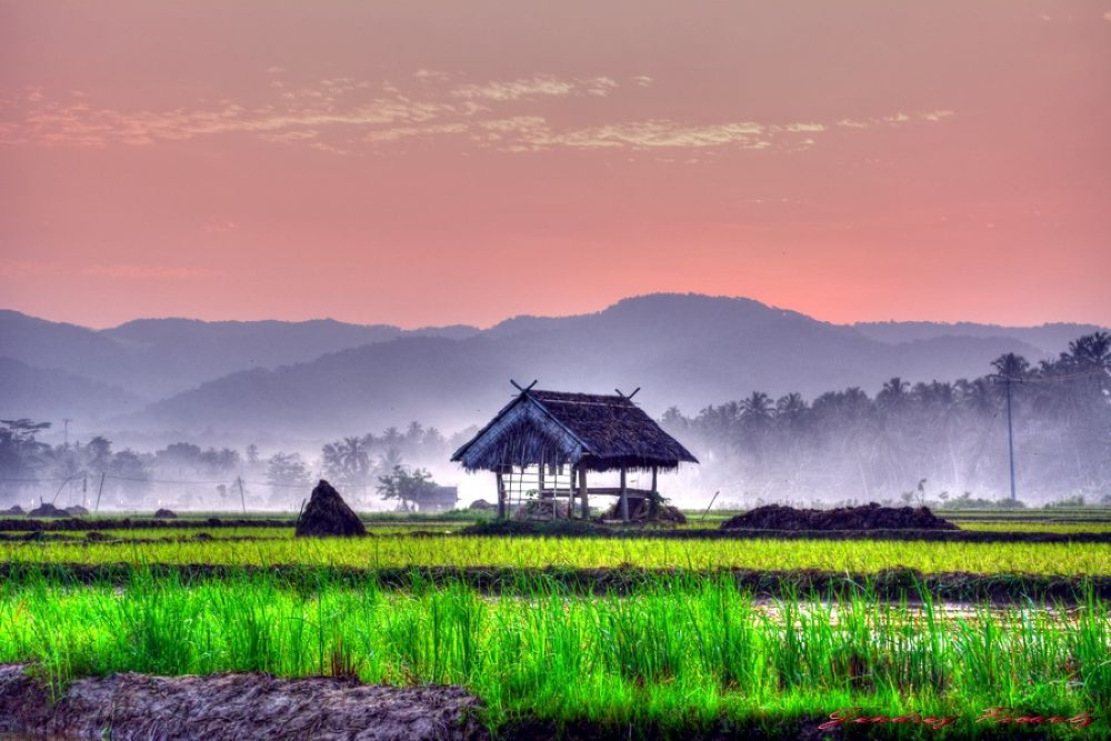 House hut in the rice fields by Jendrey