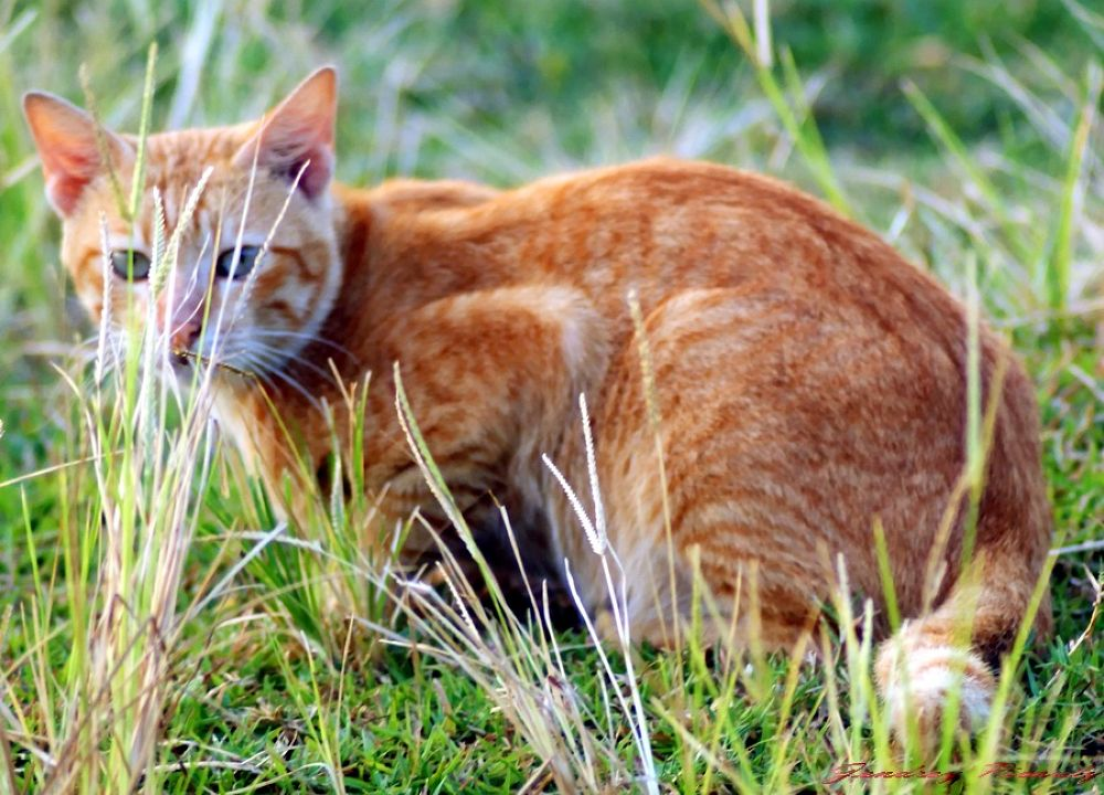 Cat by Jendrey