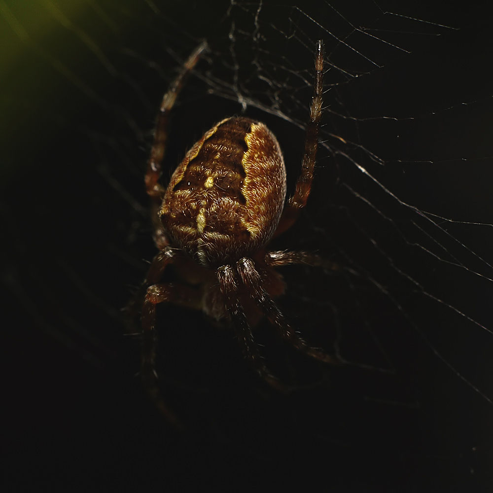 Spider #2 by Asterix93