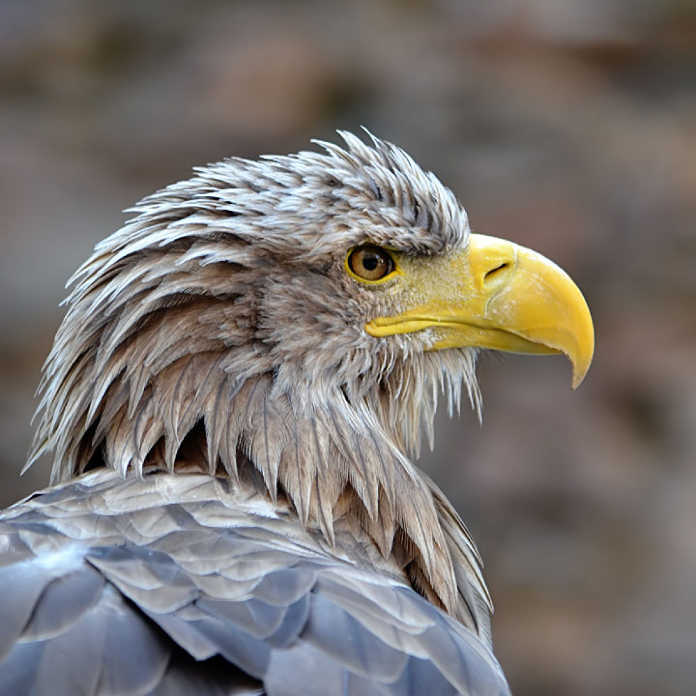 Rapace by Asterix93