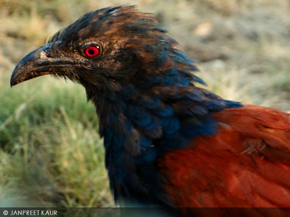bird!! by janpreetkaur