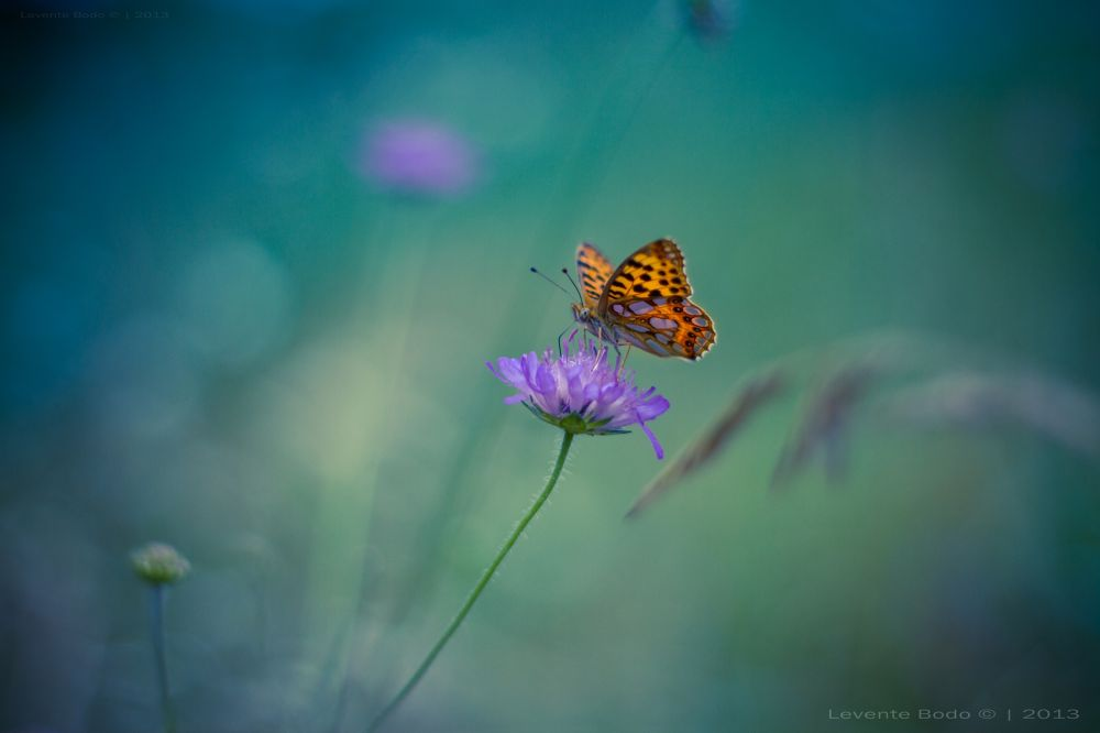 Twiligt Butterfly by icemanphotos