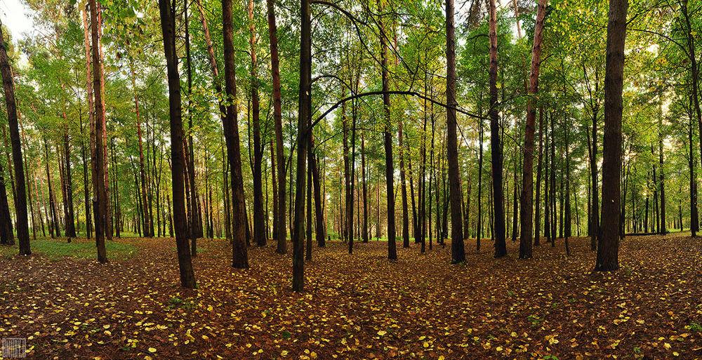 Autumn day by Dmitry Doronin