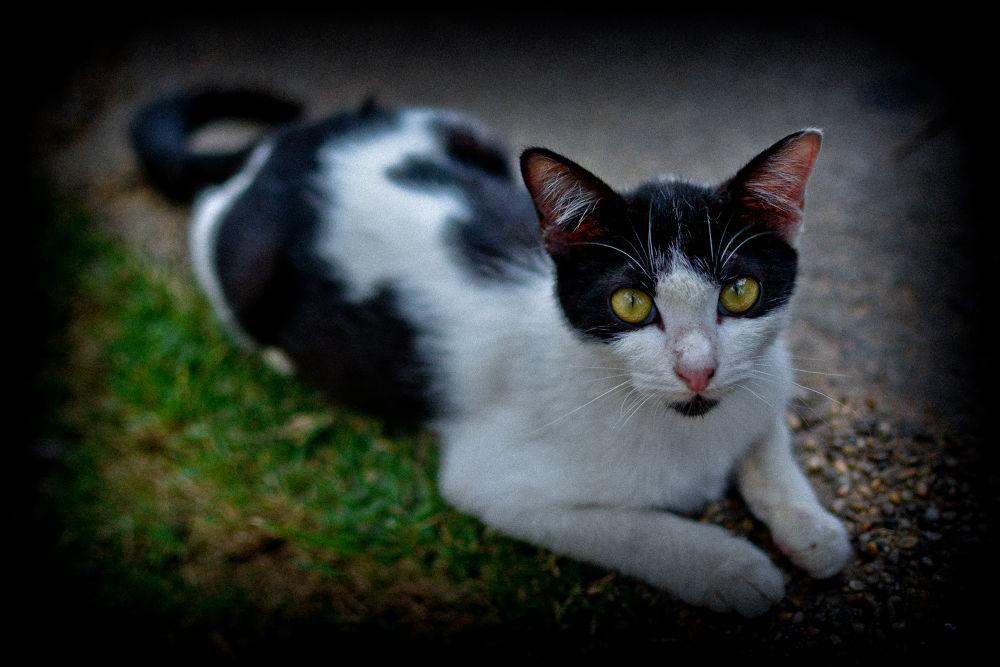 Street Cat by Azry Azmy
