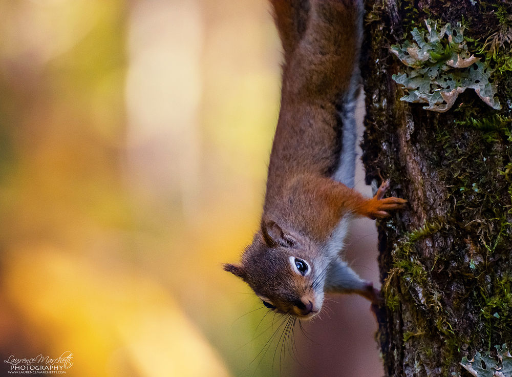 Is it fall already? by Laurence Marchetti