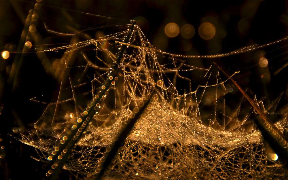Photo in Macro #macro #nature #cobweb #dew #light