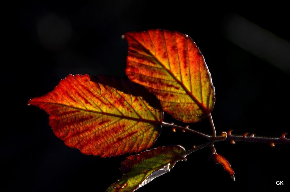 leaves by Geneviève Karlsson