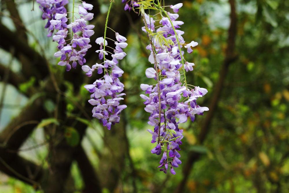 IMG_0915  Welcome to Kadoorie farm & Botanic Garden by faito2