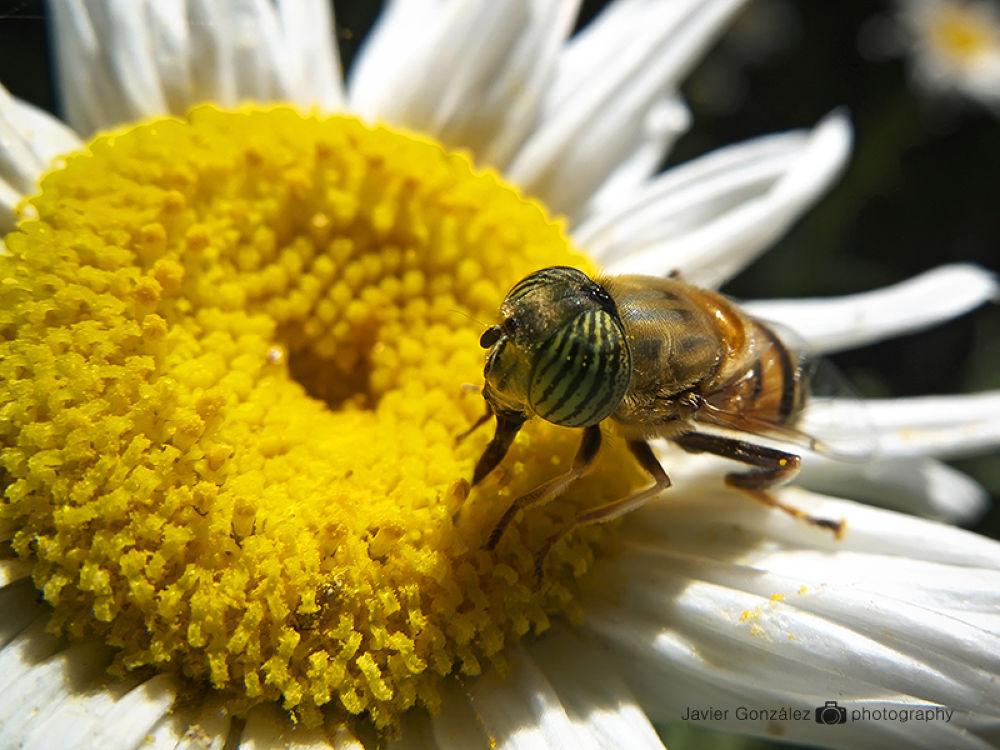 Macro. mosca. Fujifil x10 by Javi40d