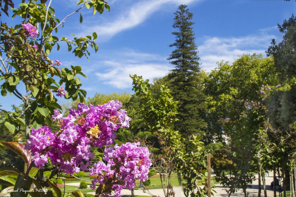 PalácioCristal àrvores1 by mikopakII