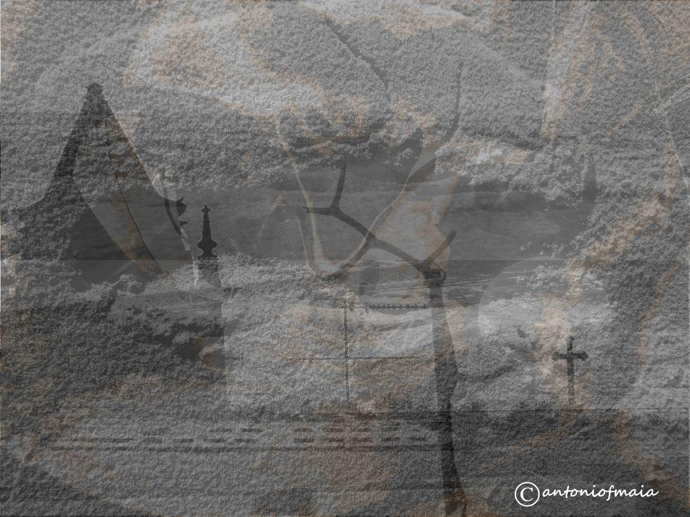Faith roots... MULTIFRAME WEB by Antonio F. Maia