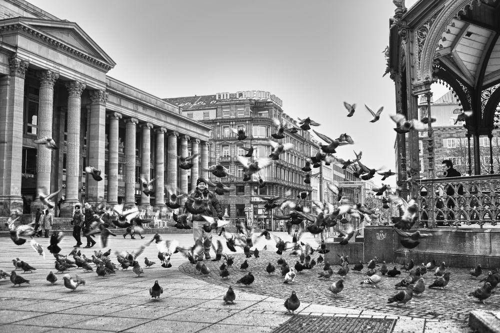 Flyingbirds by Babynesh05