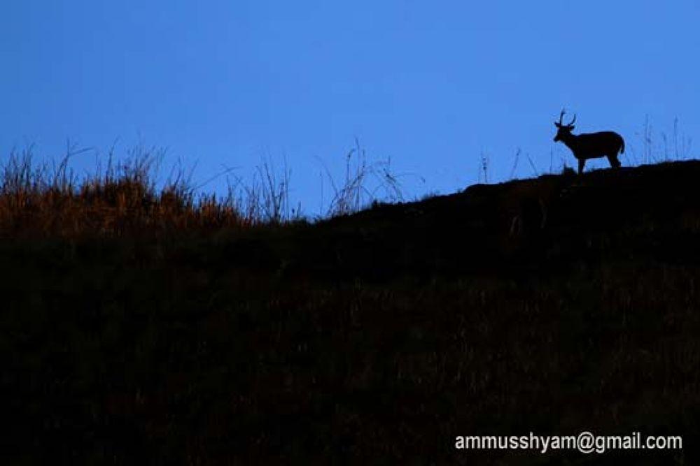 21 by ammusshyam