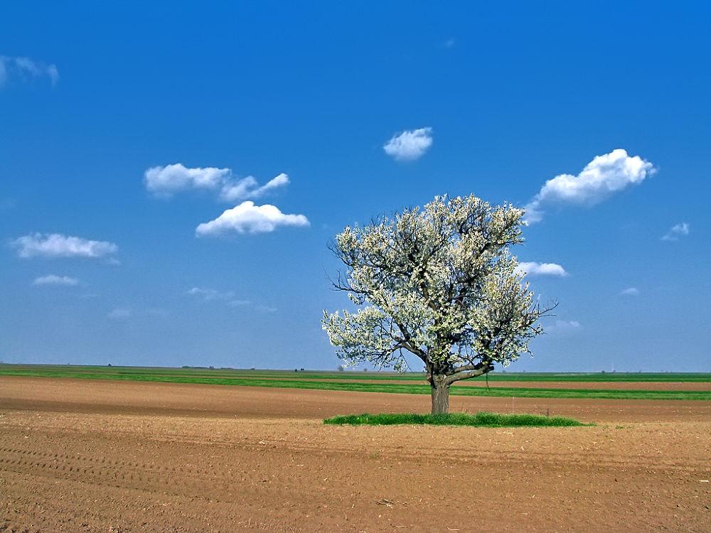 Spring by djanibardoti