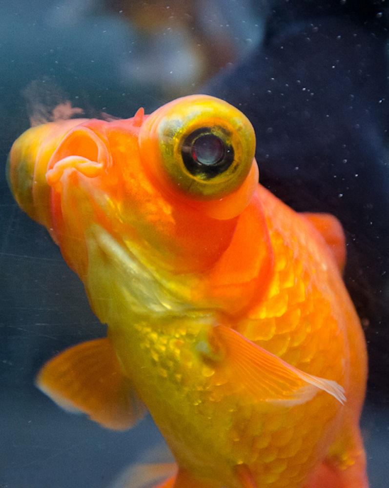 fish hammer by MarcioMonteiro