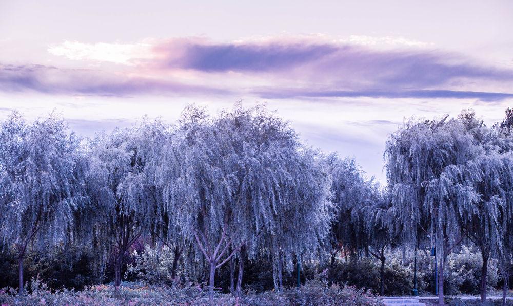 IMG_0225 by qianfang