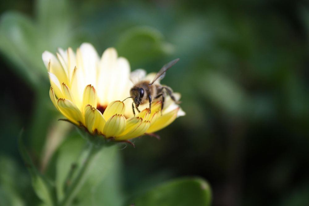 Bee. by nikitatomanova