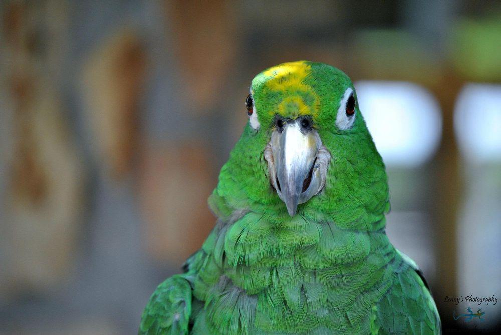Domestic Birds_00015 by lennylacey