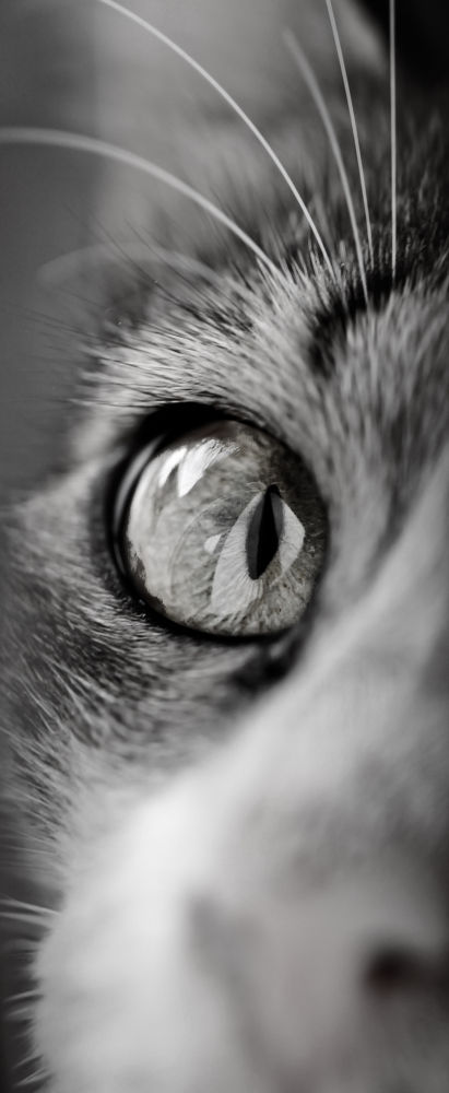 Cat Eye by Thafeed