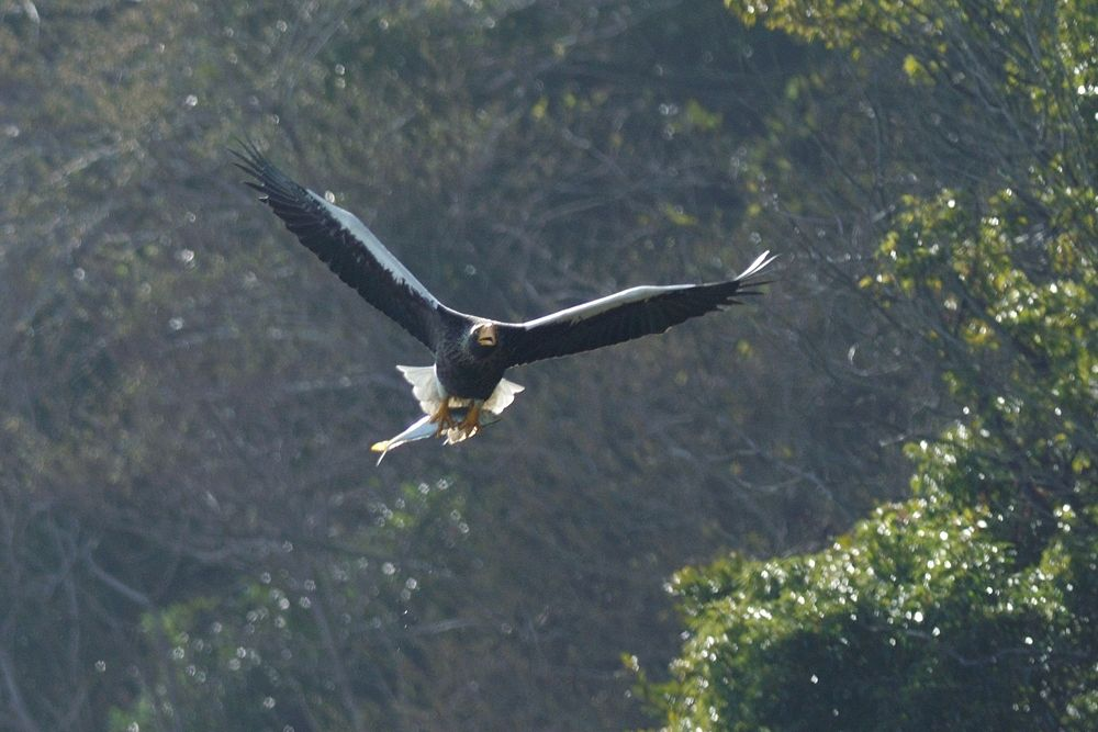 Photo in Animal #steller's sea eagle #bird #fish