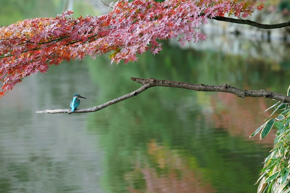 Autumn Tint Landscape ! , Kingfisher by Mubi.A