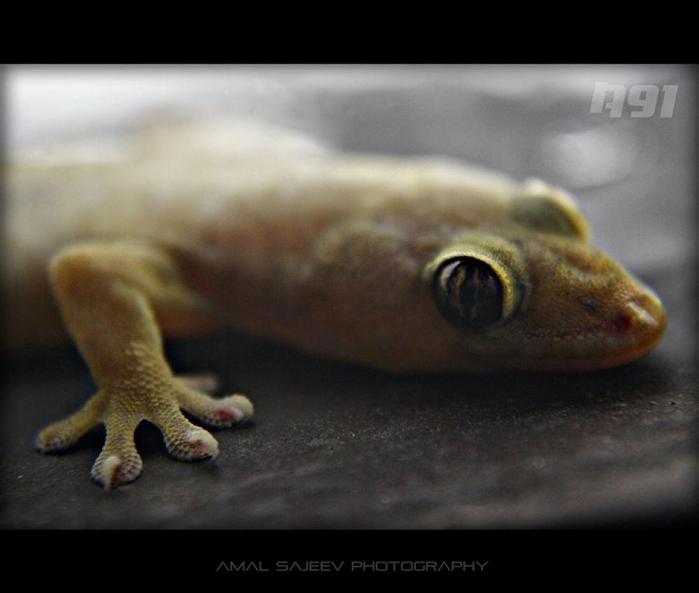 lizard (Custom) by amalsajeev