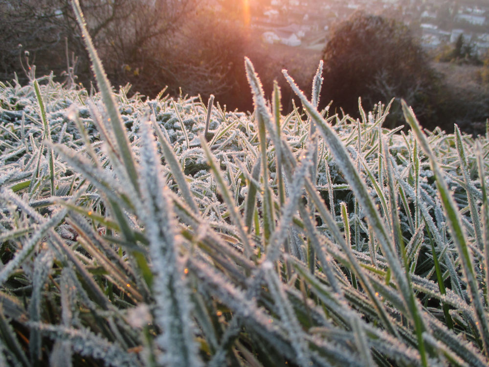 Frosty Morning 1 by Katy Haecker