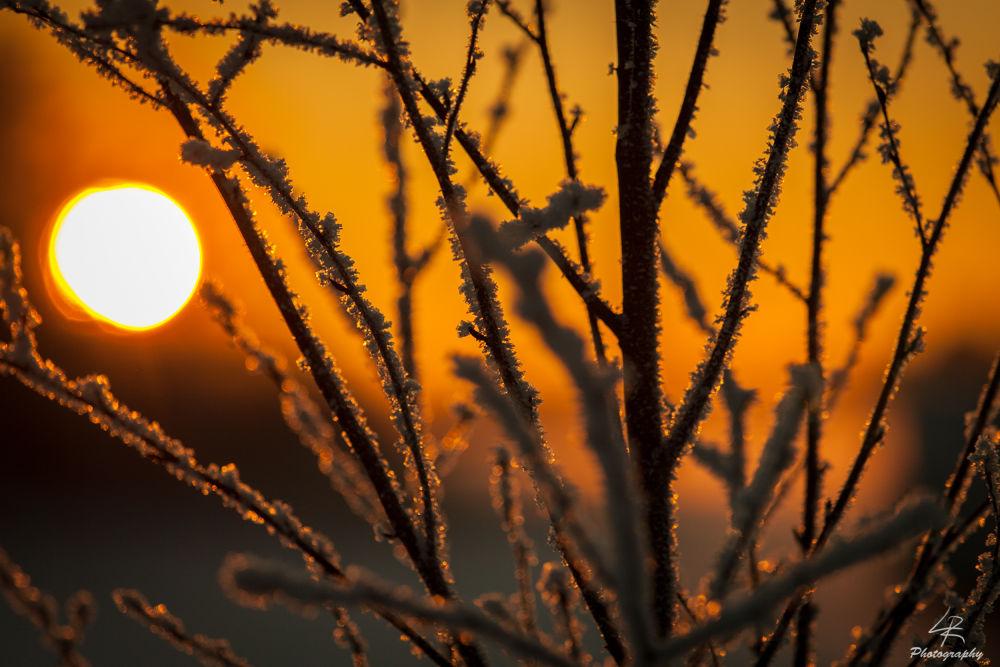 Frozen Sunset by Leo Rantala