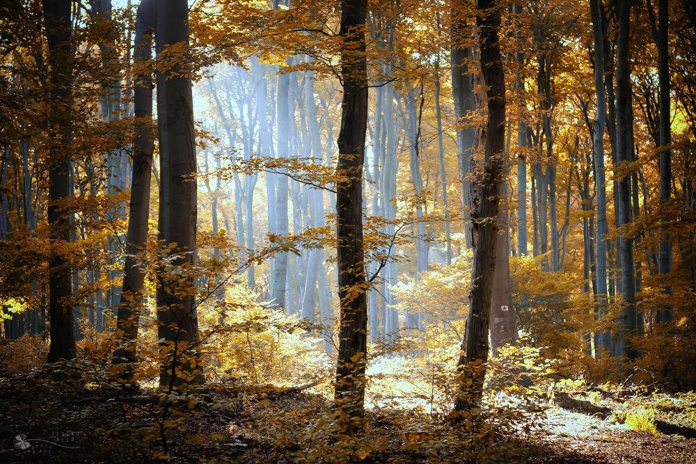 Morning Light by Ildiko Neer