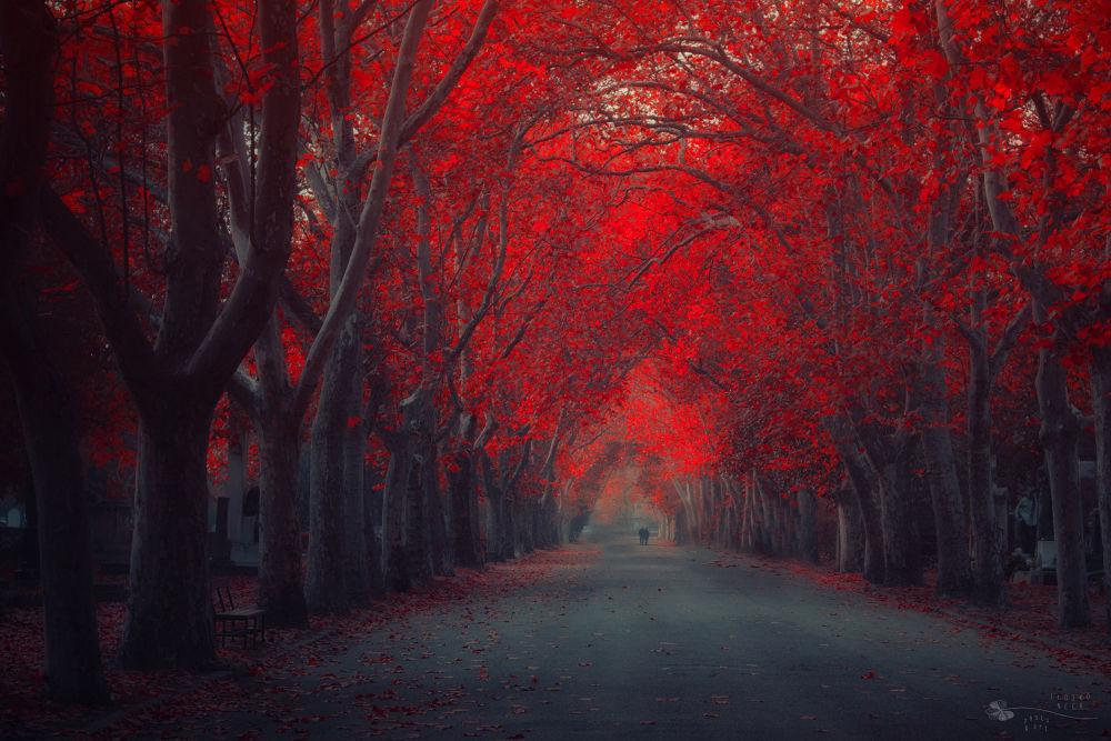 Road of Sorrow by Ildiko Neer