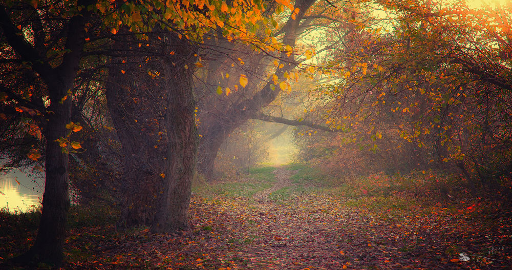 Till the End of Time by Ildiko Neer