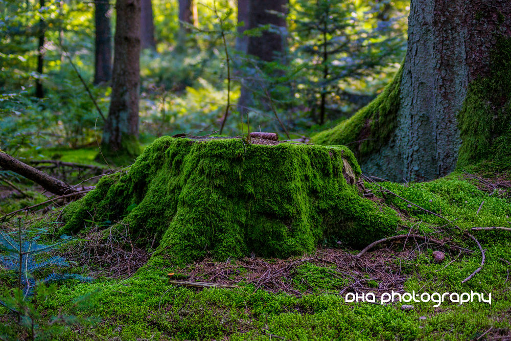 mossy tree stump by DHa.photography
