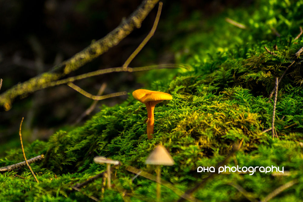 mushrooms in the wood III by DHa.photography