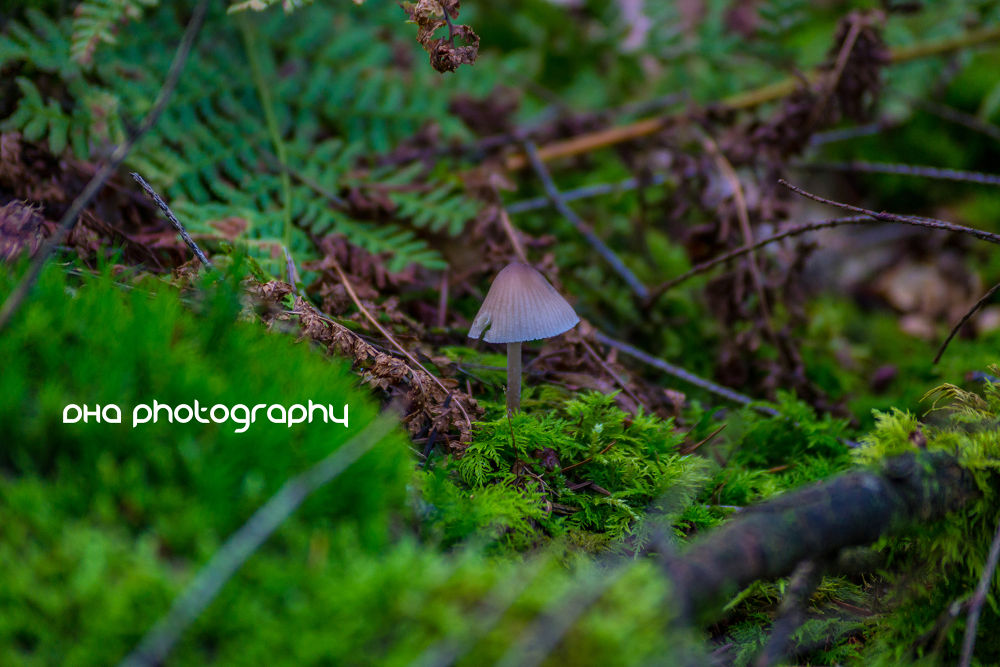 mushrooms in the wood II by DHa.photography