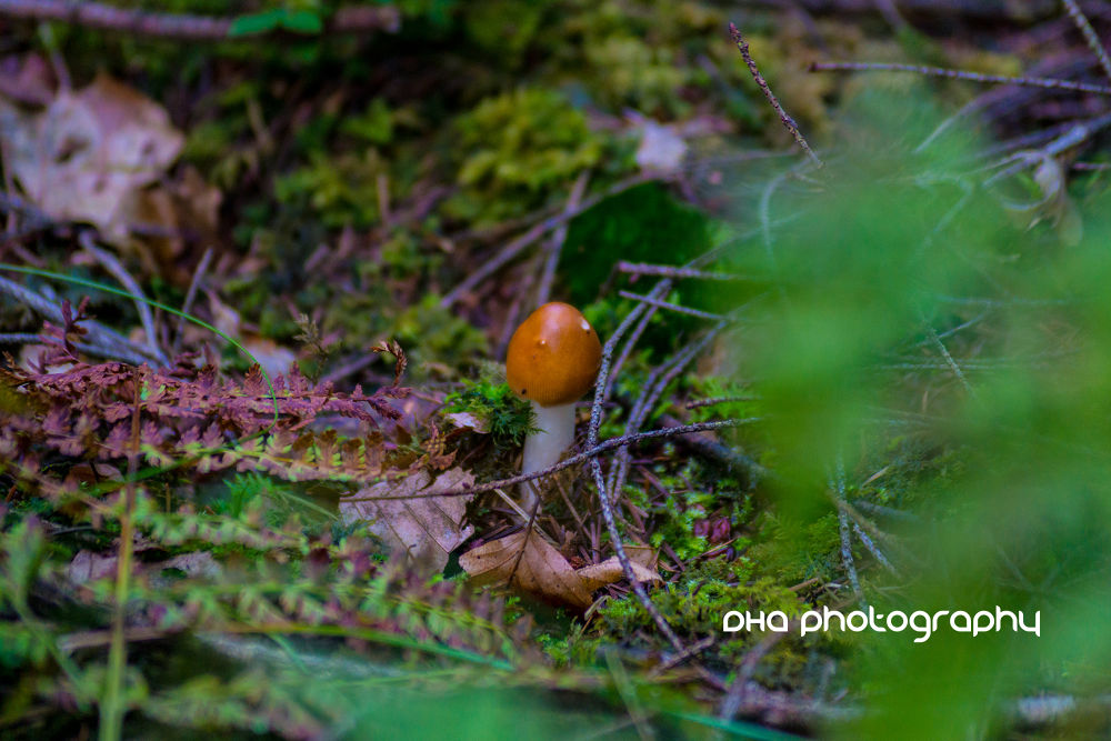 mushrooms in the wood IX by DHa.photography