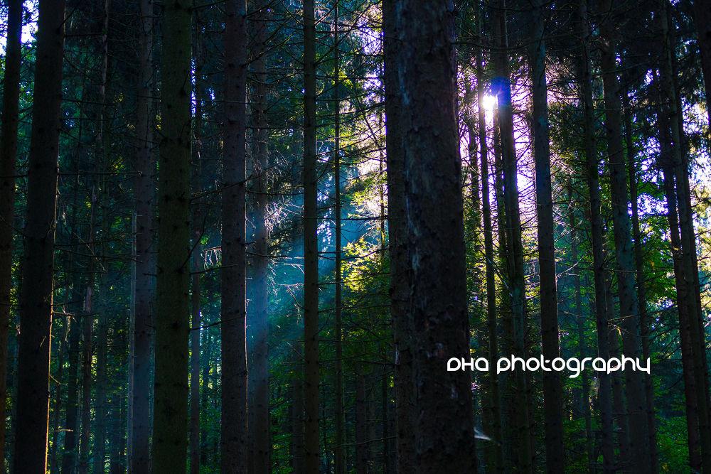 Photo in Nature #sunbeam #sun #forest #wood #nature