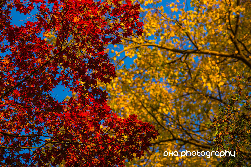 Photo in Nature #autumn #mood #leaves #red #yellow #tree