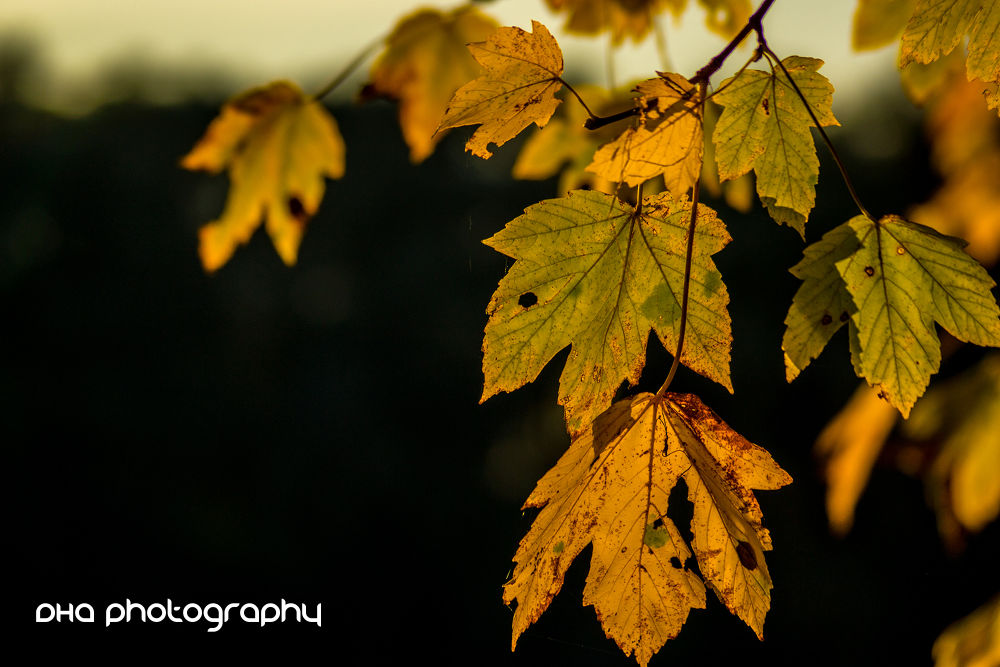 Photo in Nature #yellow #leaves #autumn #nature #tree