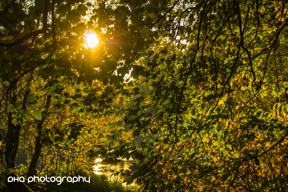 when the sun touches the leaves by DHa.photography