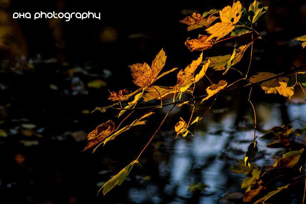 yellow leaves in the sun by DHa.photography