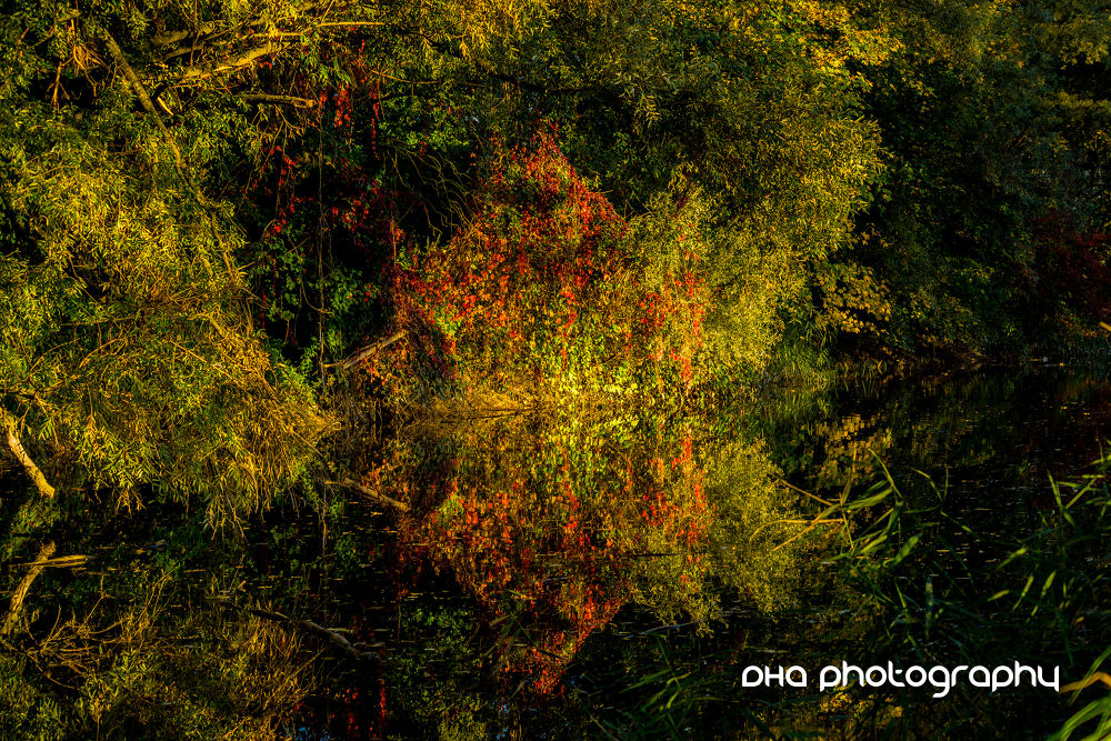 autumn can be so beautiful by DHa.photography