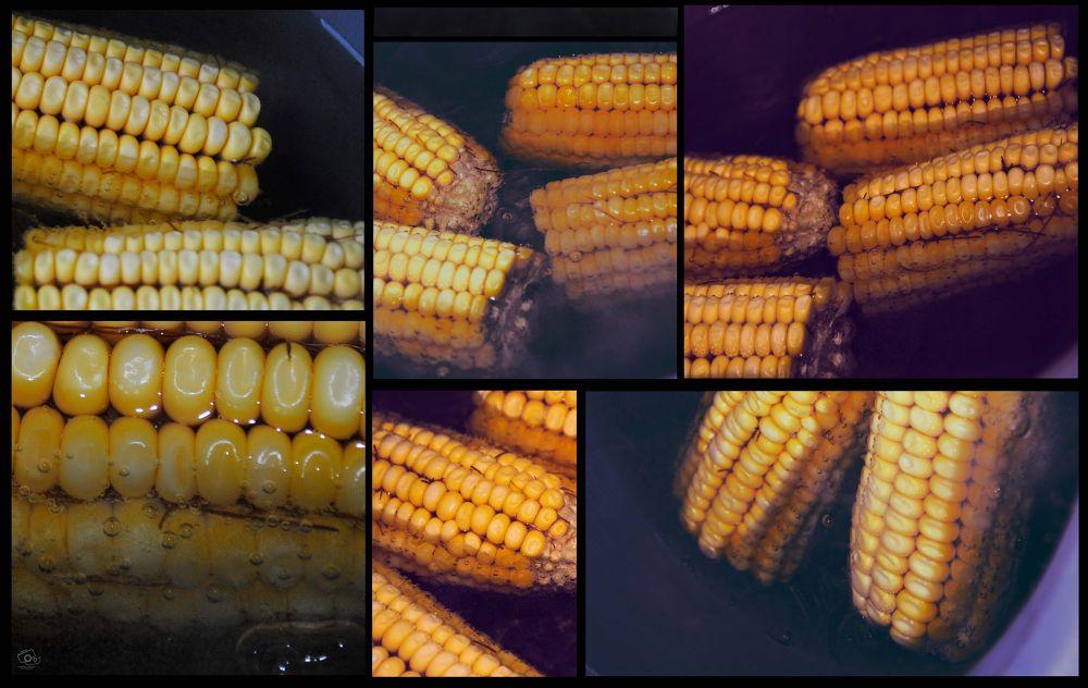 corn by Mahshad Moosavi