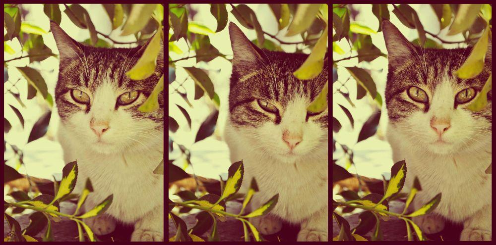 cat  by Mahshad Moosavi