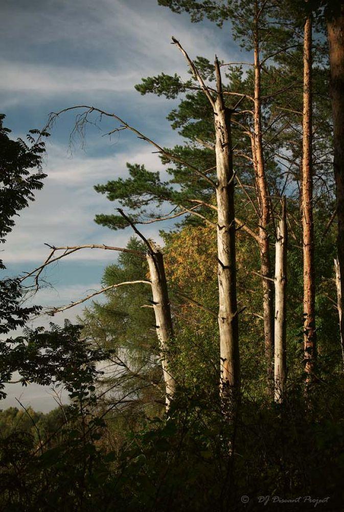 Photo in Landscape #landscape #autumn