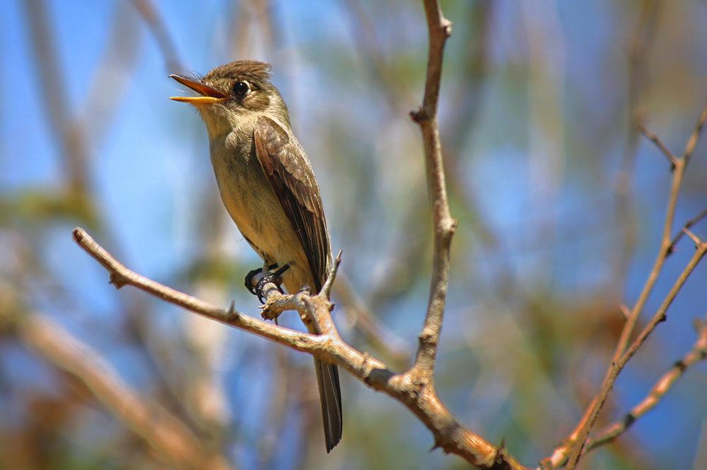 Cuckoo by Jorge Coromina