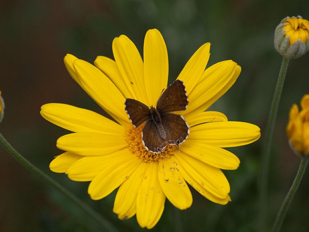 butterfly1 by giuseppestronati