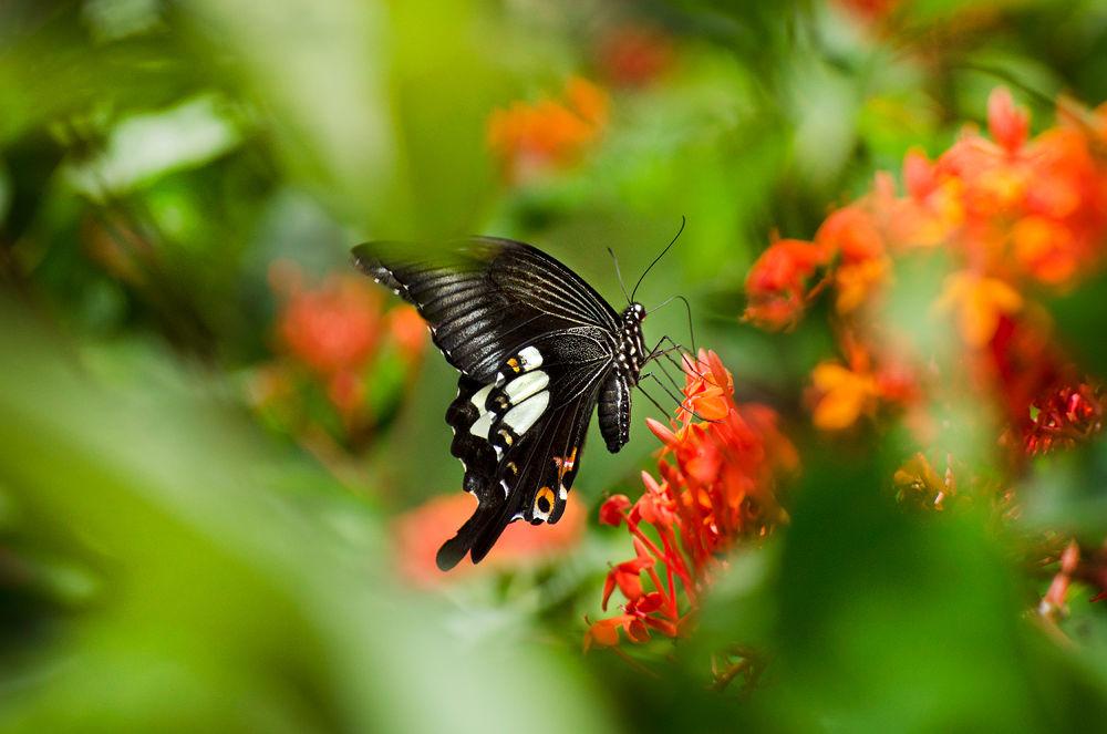 Butterfly by Jacqueline Barkla
