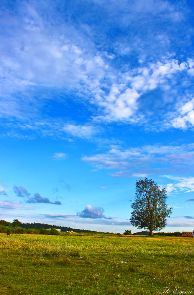 Photo in Landscape #landscapes #incredible india #dehradun #uttrakhand #blue sky #nature #canvas #canon 600d #the essence